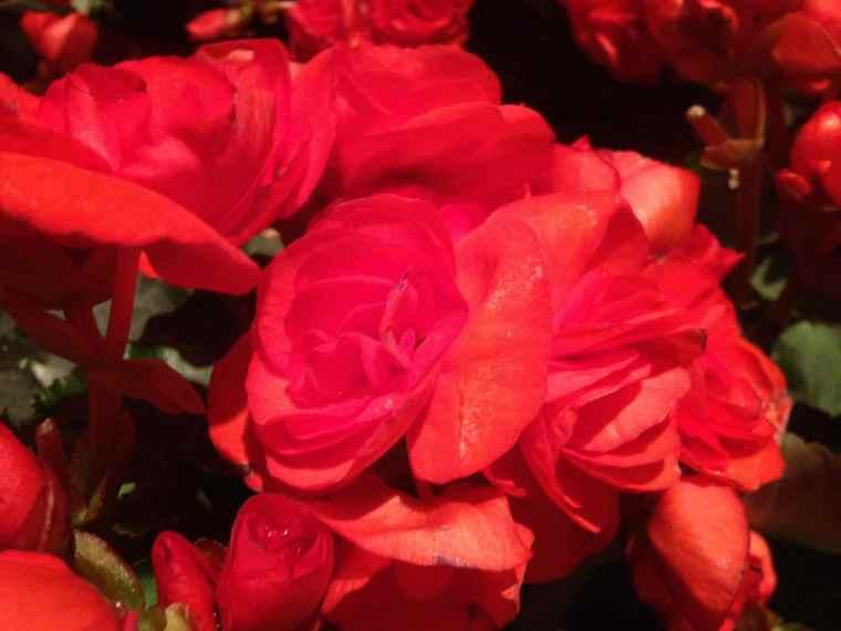 Flowers at Macy's Secret Garden