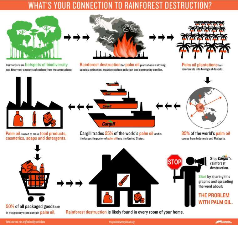 Infographic courtesy of Rainforest Action Network