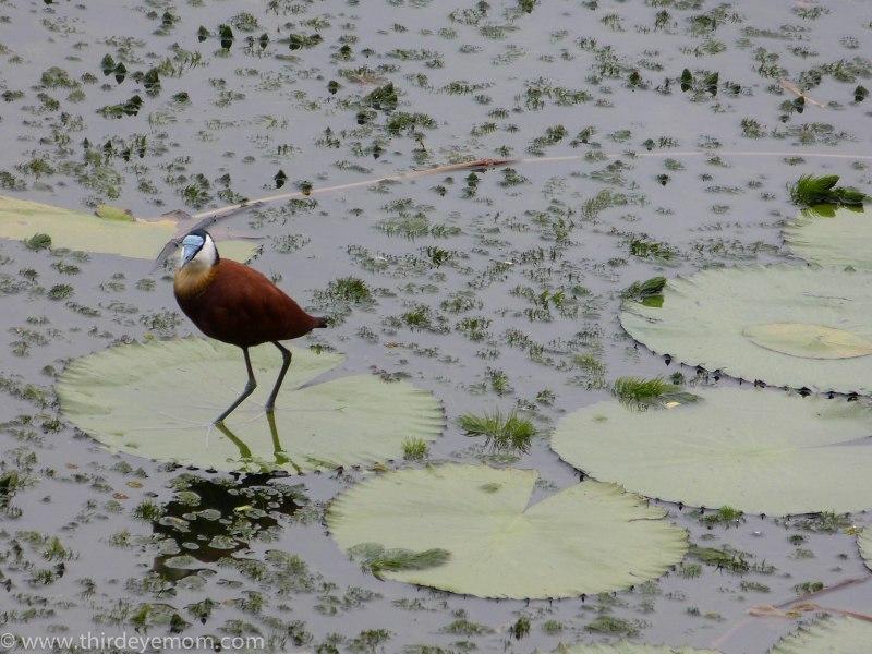 Avant Hotel Lake Tana Ethiopia
