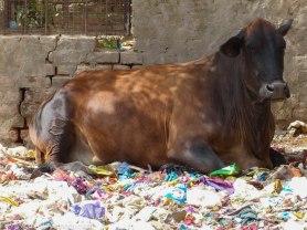 India slums