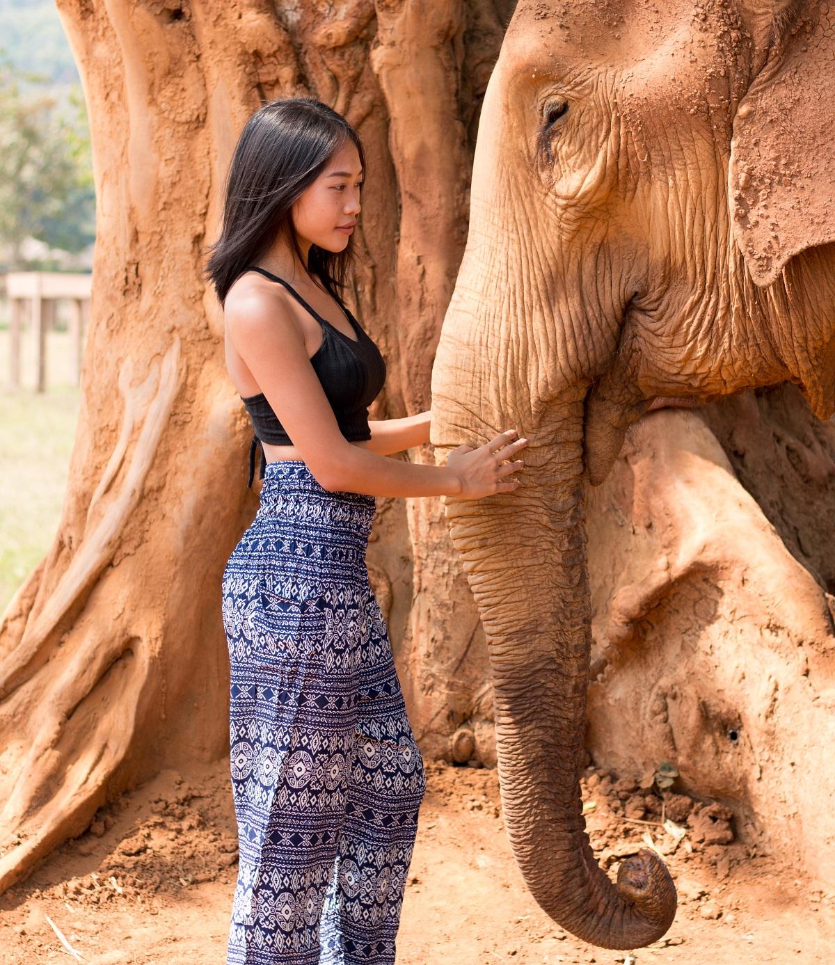 Elephant Nature Park - Beautiful Moment