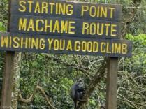 Machame Gate Kilimanjaro Tanzania