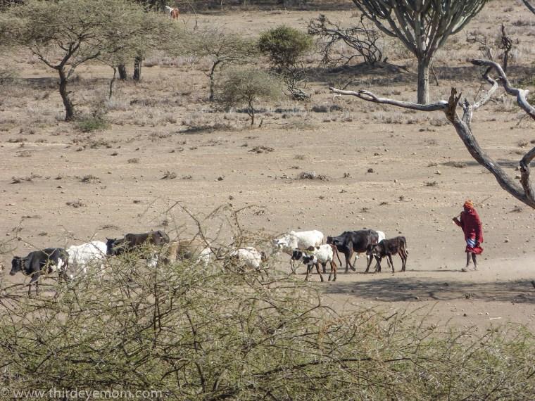 Mkuru Training Camp Maasai Tanzania