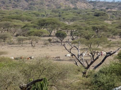 Mkuru Training Camp Tanzania