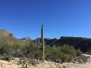 Bear Canyon, Tucson, Arizona