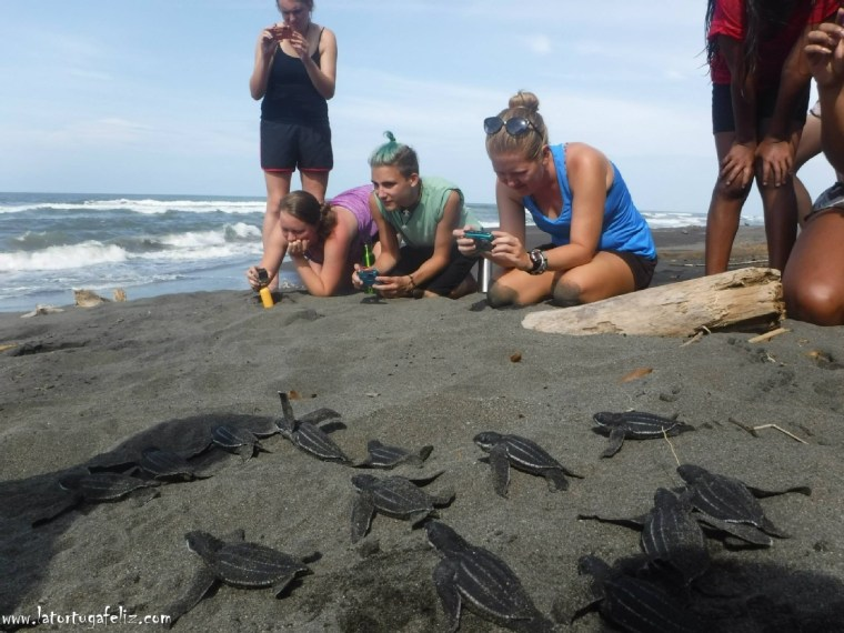 With the help of volunteers, the NGO aims to protect Costa Rica's sea turtles with La Tortuga Feliz.