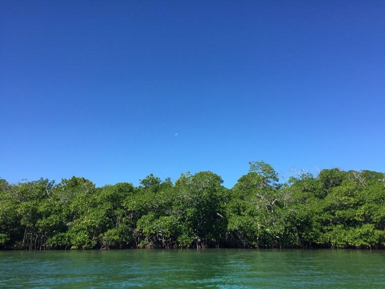 Florida Keys Mangroves