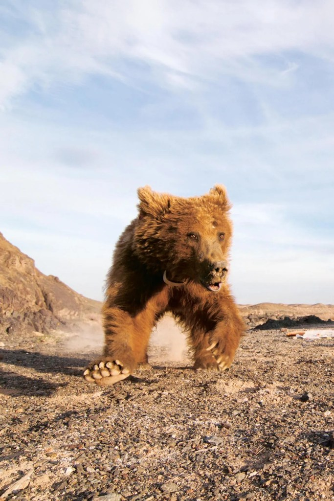 Gobi Bear Project