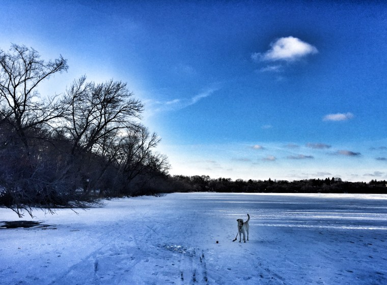 A morning walk on the frozen ice of Lake Harriet with our aptly named dog, Winter.