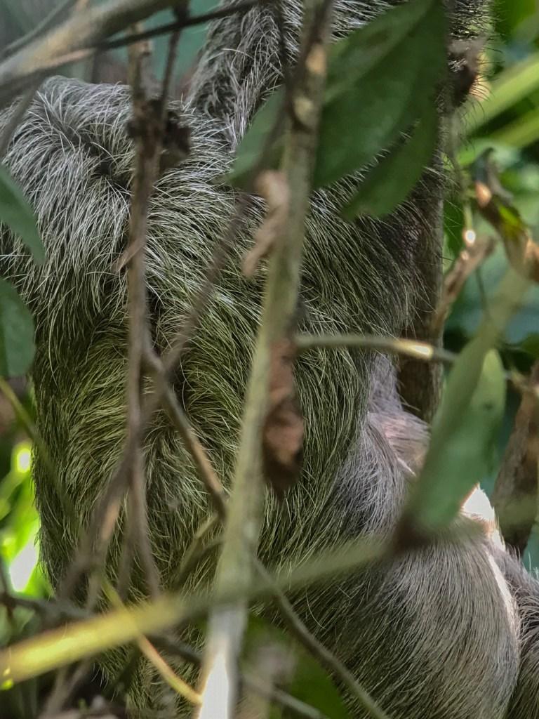 Manuel Antonio National Park, Costa Rica