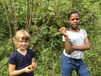 Picking cloud forest native naranjilla fruit to be made into tasty jam. Photo credit: Tricia Hall