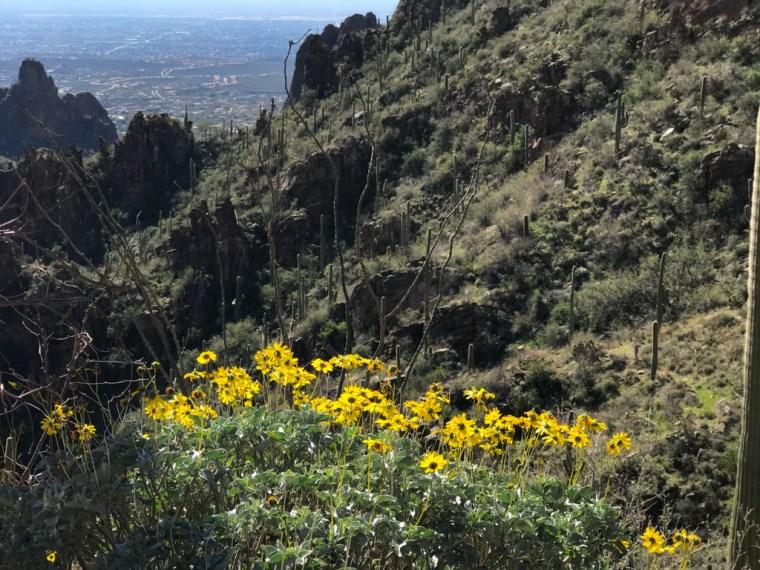 Ventana Canyon Trailhead, Tucson, Arizona