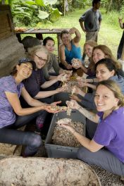 Cloud forest Ecuador. Working at Mashpi farm sorting cocoa seeds from the pods. Photo credit: Purposeful Nomad