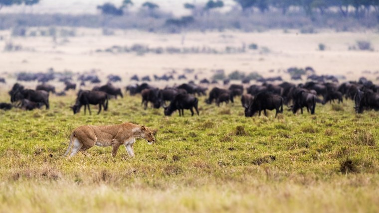 Above Safaris