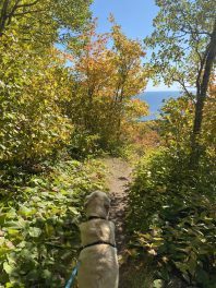 fall colors at Leveaux Mountain