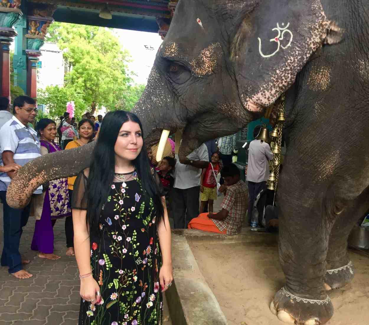 elephant in pondicherry