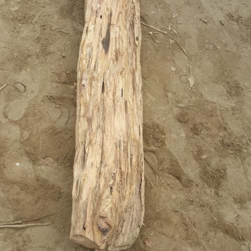 branch from a palo santo tree