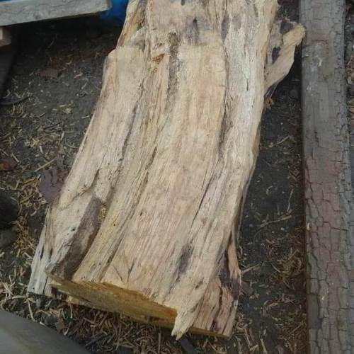 a wooden stump from a palo santo tree