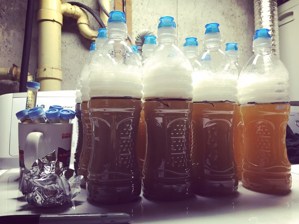 foraged yeast pilot batch fermenting