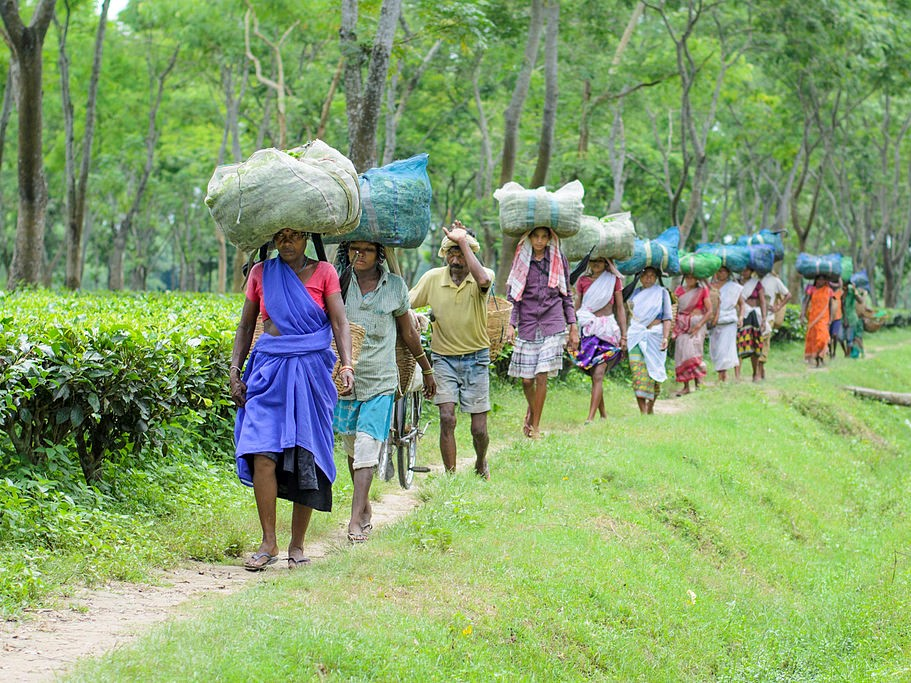 Join the call for tea buyers to support Assam wage increase