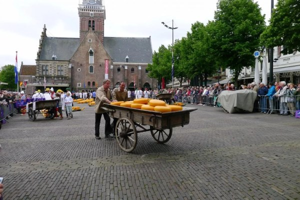cheese barrow in Alkmaar