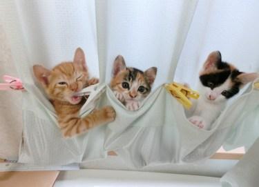 猫はなぜ洗濯機に入ることが好きなのかその理由と注意すること