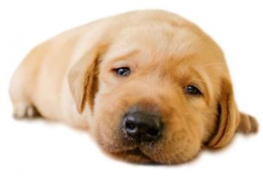 犬のカットを自分でしたい!セルフトリミングの手順とコツ