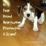 Is Year Round Heartworm Prevention a Scam?