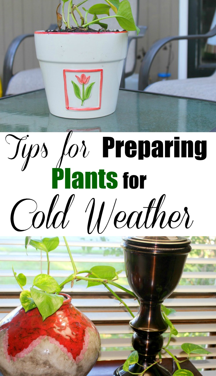 tips-for-preparing-plants
