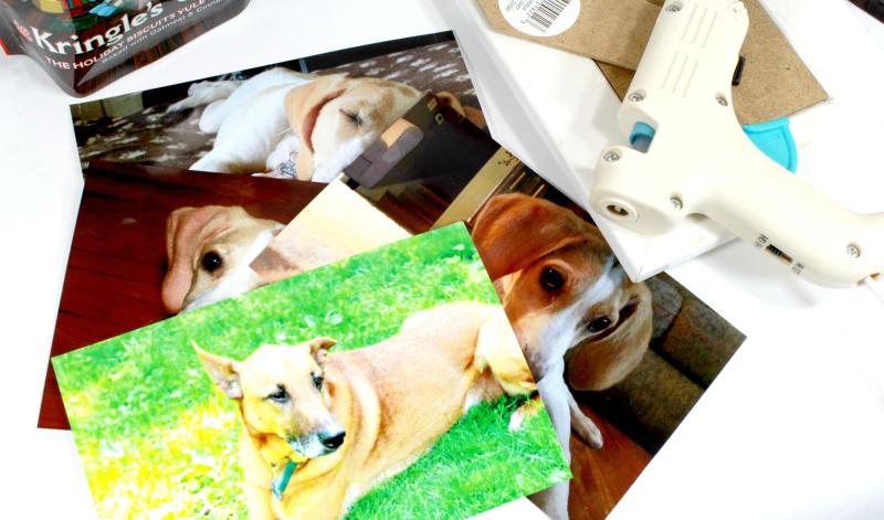 DIY Dog Treat Photo Cube - ThirtySomethingSuperMom