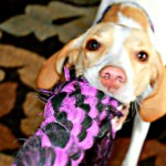 Flea Protection Tips for Dog Owners