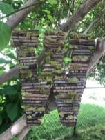 Woodland $40 each or $70 a pair