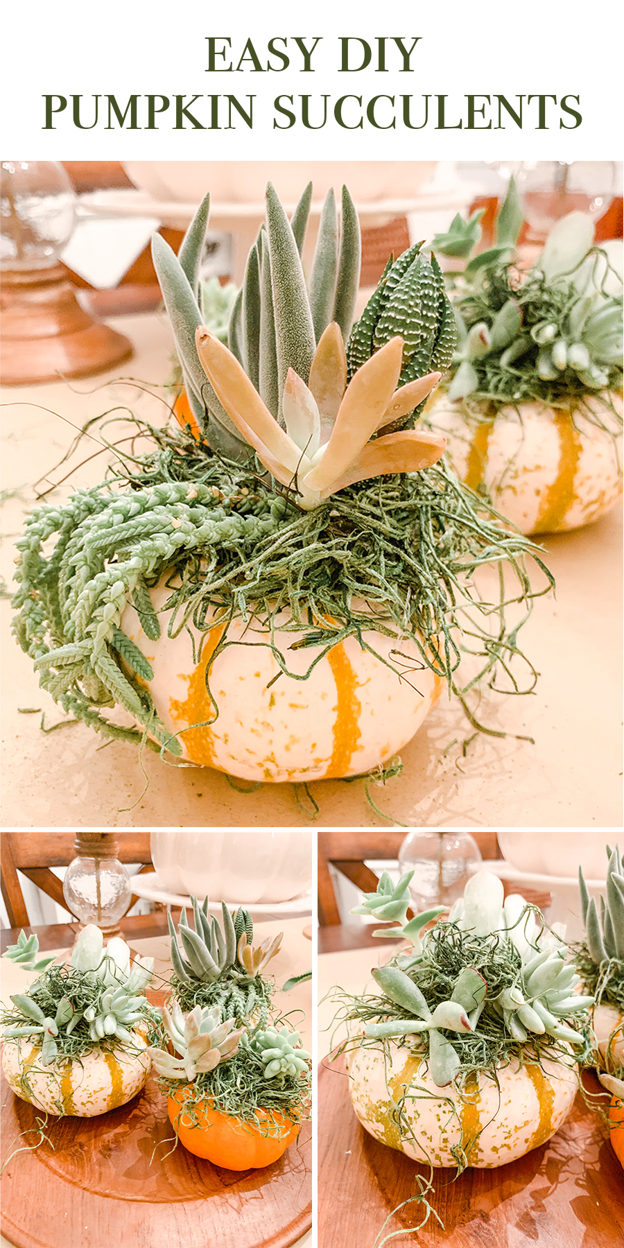 Easy DIY Pumpkin Succulents