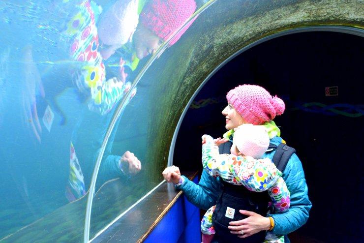 aquarium zoo baby sling