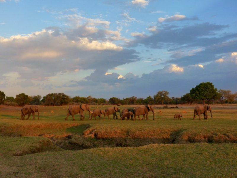 elephants zambia safari