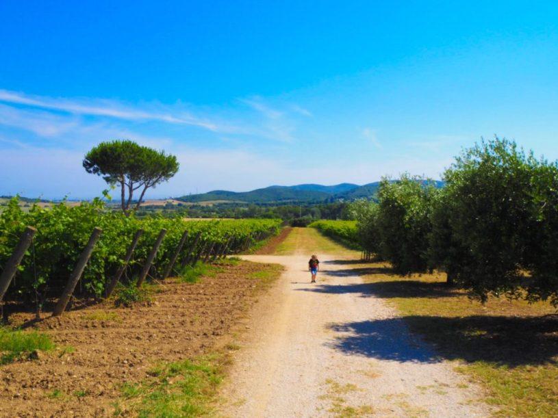Tenuto Poggio Rosso Vineyard Tuscany Italy