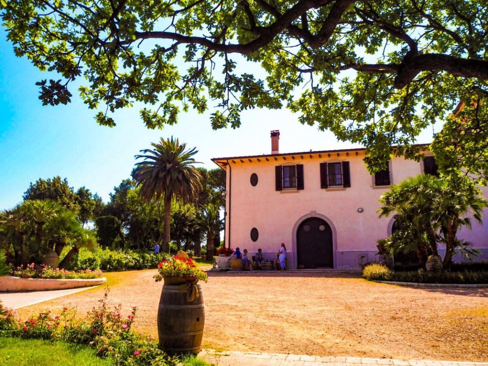 Vineyard Tenuto Poggio Rosso - 9 unmissable things to see near San Vincenzo, Tuscany with kids