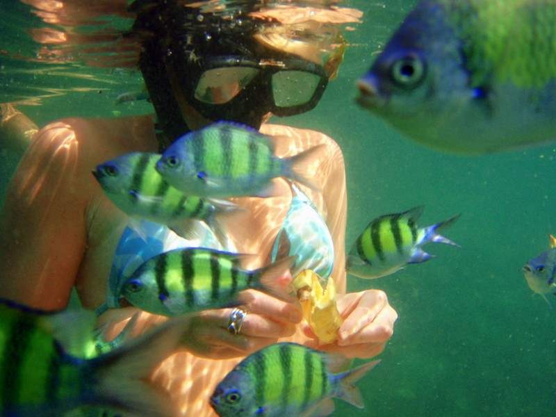 Thailand snorkelling with fish underwater