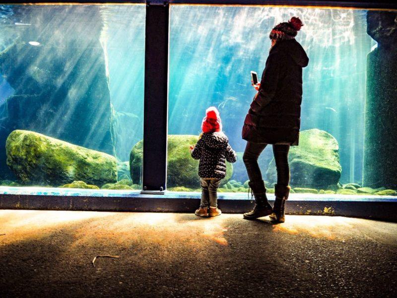 Bristol Zoo Aquarium