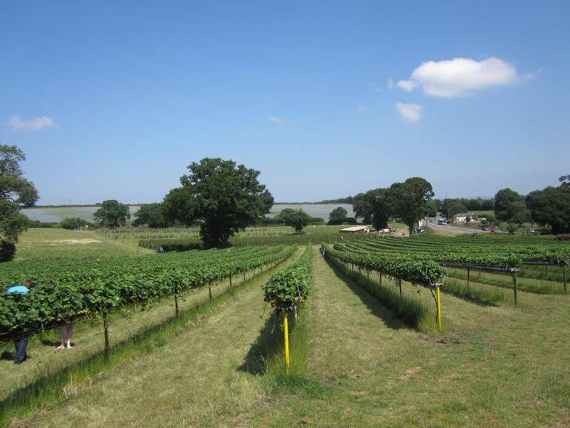 Thurloxton Fruit growers