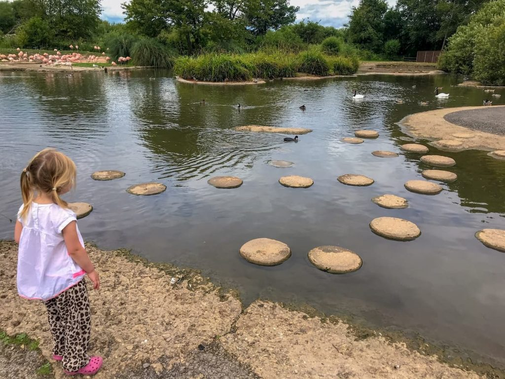 wwt slimbridge stepping stones