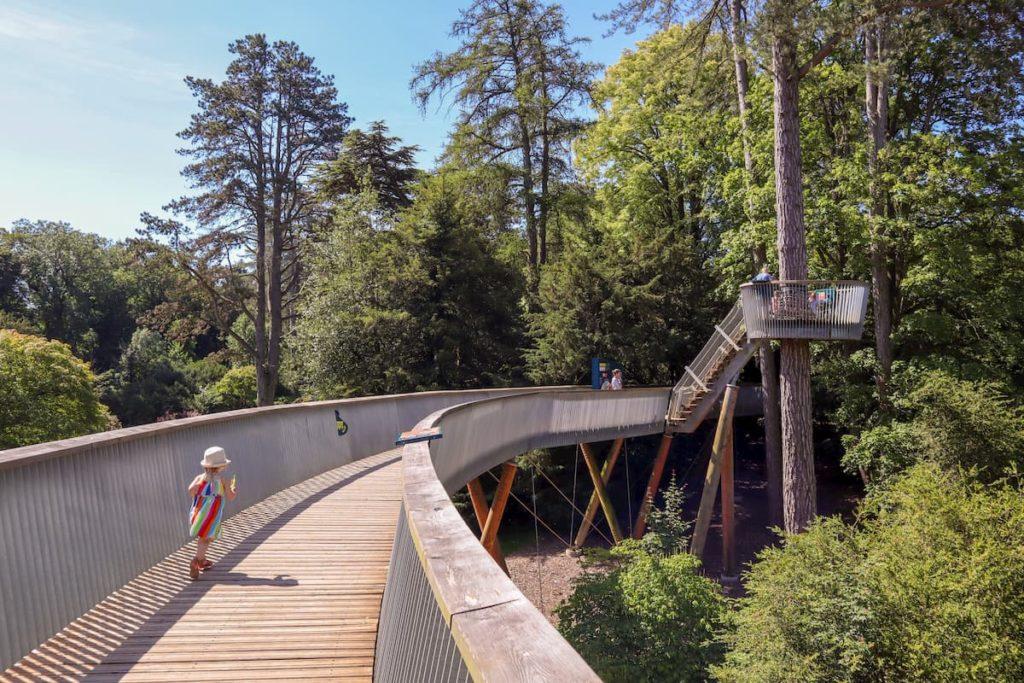 Westonbirt arboretum treetop walkway summer