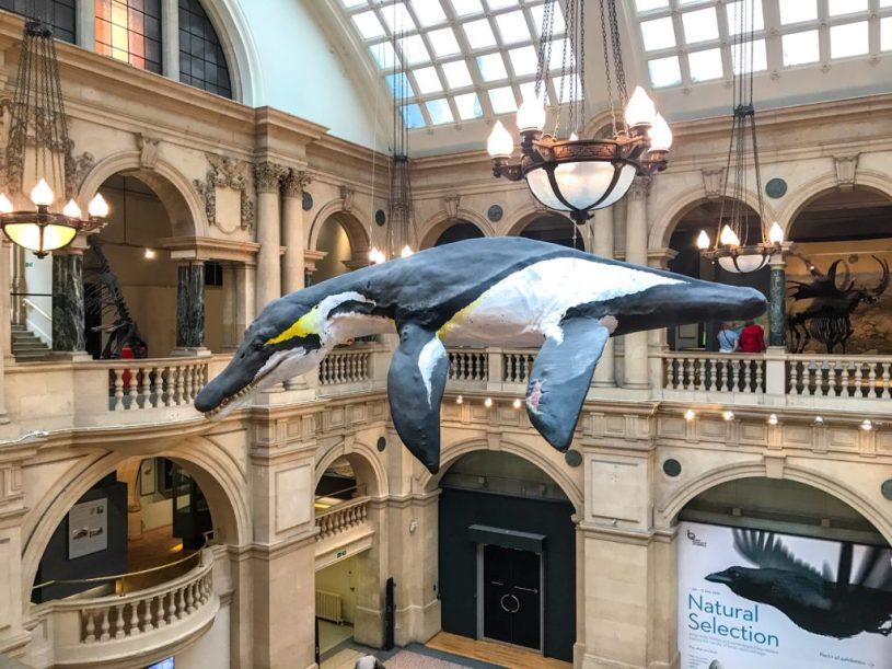 Bristol Museum dinosaur