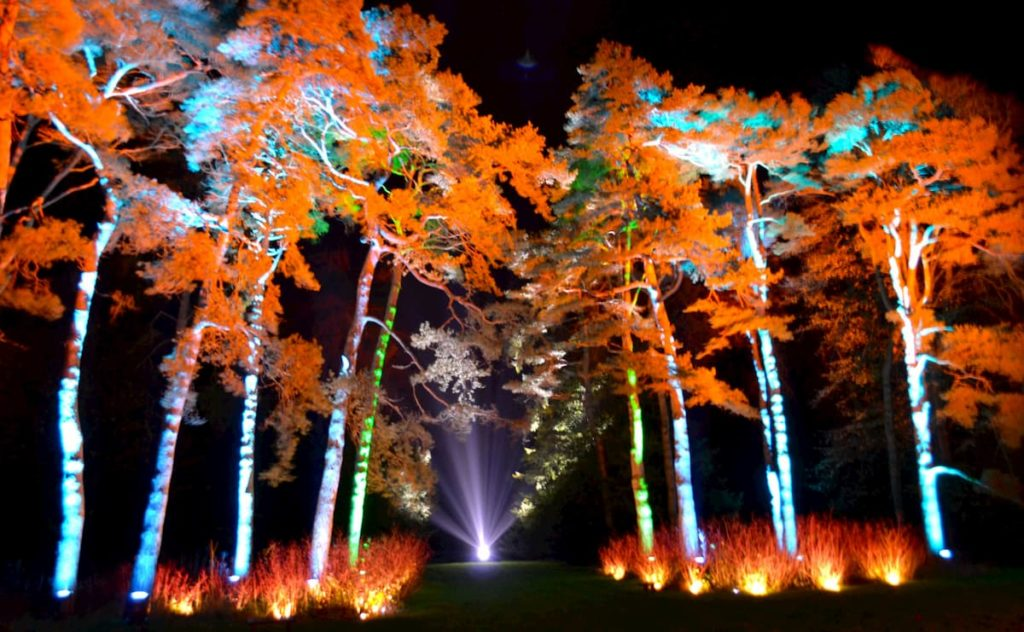Westonbirt Arboretum Enchanted Christmas illuminated trees