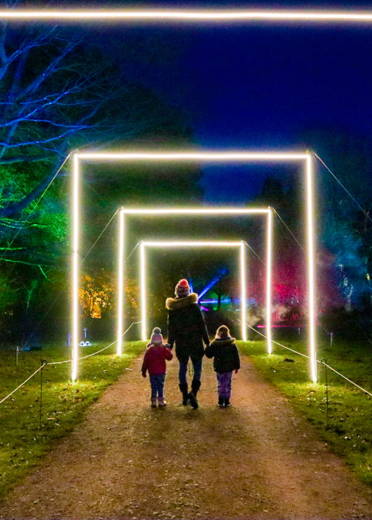 Westonbirt Arboretum Enchanted Christmas light trail