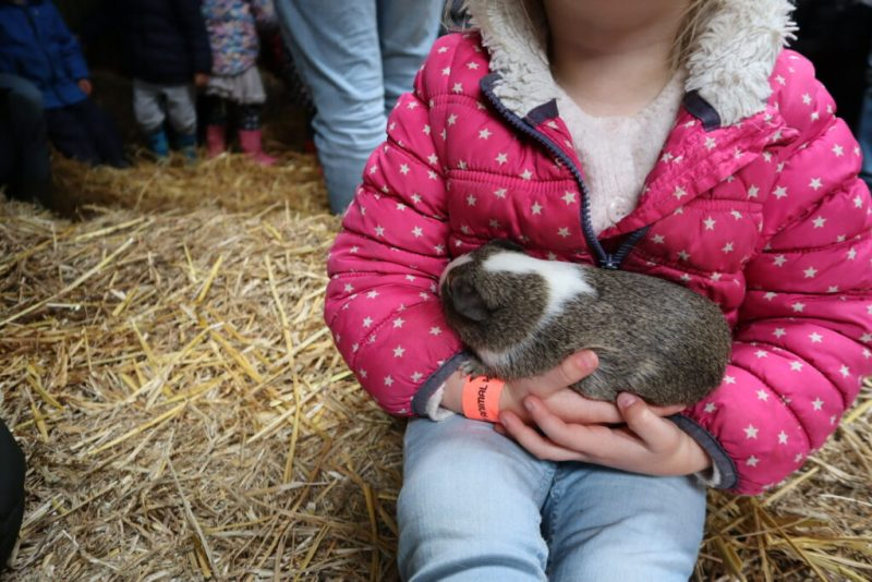 Chew valley animal farm - guinea pig holding
