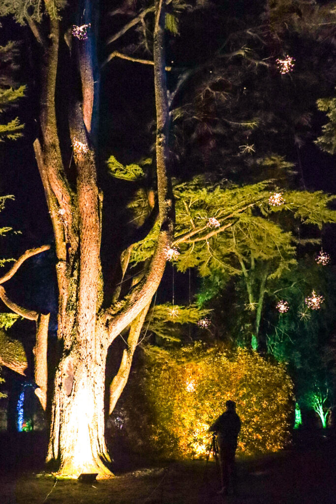 Westonbirt magical illuminated outdoor experience