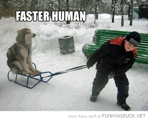 funny-husky-dog-sled-sledge-snow-faster-human-pics