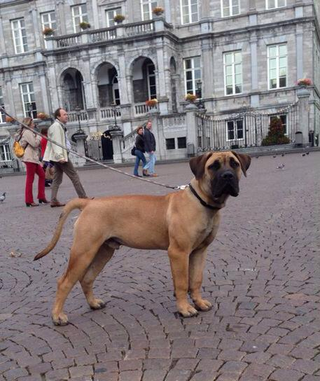 In Maastricht at six months