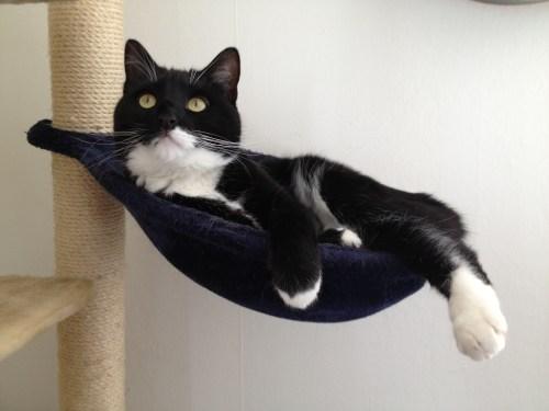 In his hammock